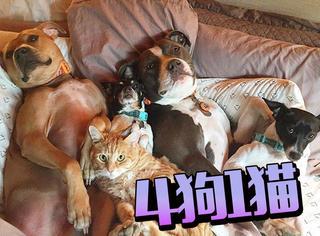 如果你的兄弟是4条狗和1只猫
