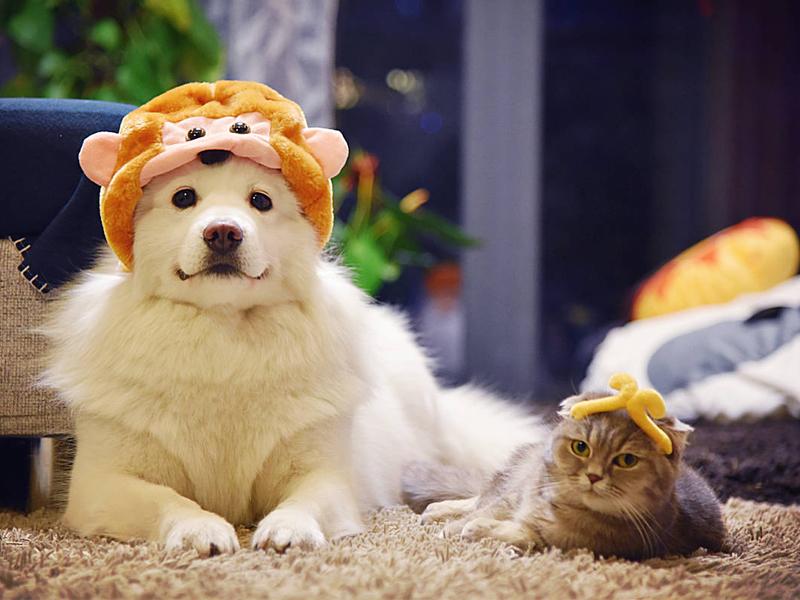 【萌萌动物gif】养猫和养狗的区别,多么痛的领悟!