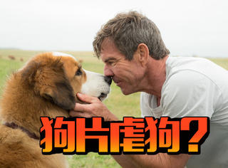 究竟是怎么回事?《忠犬八公》导演新片被爆虐待狗狗让它溺水!