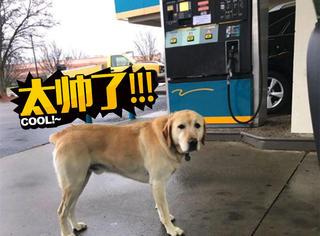 他以为捡到一只迷路狗,但看到狗牌后震惊了
