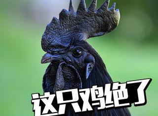 这只鸡,我做定了