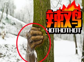 这只手从1968年就开始抓着这棵树不放了!是得多大仇?