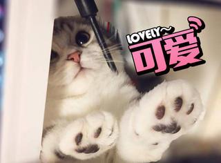 猫奴看过来,日本的肉球日你值得关注