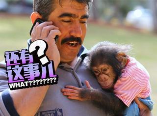 小萌猴生下来被亲妈嫌弃,改认管理员当妈