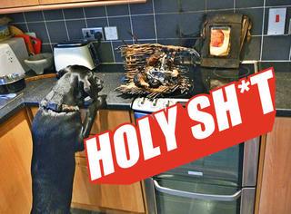【Holy Shit】狗狗为了偷吃好吃的!差点把主人家都烧了!