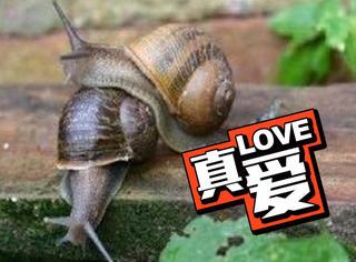 为了帮一只蜗牛脱单,科学家用电台帮它征婚找到了真爱