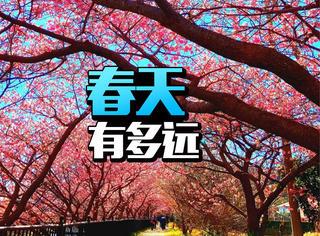 当8000棵樱花树在日本河津全部绽放,好想去坐小火车