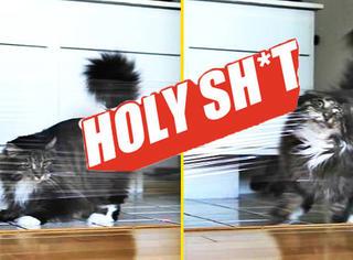 【Holy Shit】看看喵星人是怎么被一张门上的保鲜膜搞疯的!