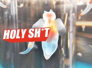 【Holy Shit】神奇生物在哪里?北海道出现了这么大的海天使!