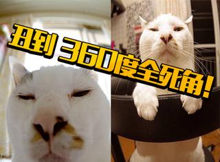 丑到360度全死角的日本羊羹君猫咪,无敌无敌是多么的寂寞~