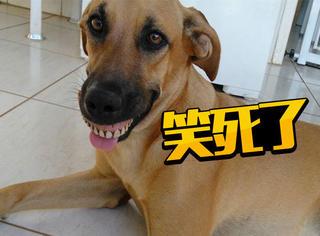狗狗回来一脸媚笑,原来是挖到了奶奶的宝贝