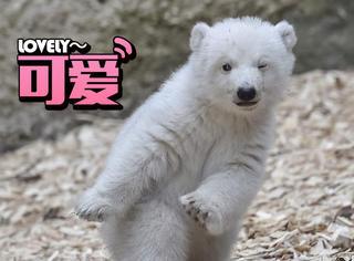 这只3个月小北极熊的眨眼萌照暖化了无数人!