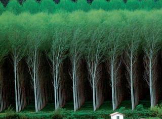 患有强迫症的森林,感觉自己看了假照片