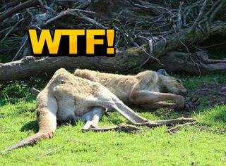 三年死了500只动物,这个动物园被骂惨了