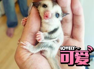 这些动物还是小只的时候也太可爱了