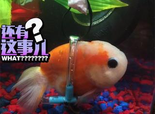 一只坐轮椅的鱼