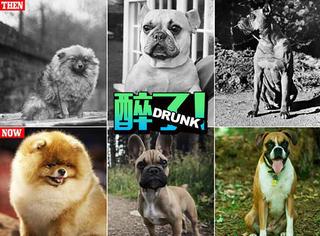 过了100来年,狗狗们都变了样!