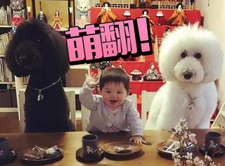 日本一年轻奶奶分享了两只狗狗和小孙女的日常,萌翻!