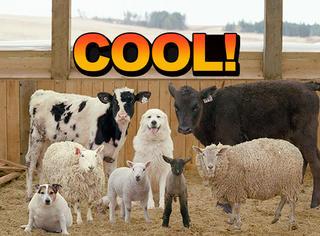 动物也拍时尚大片,不要太酷了