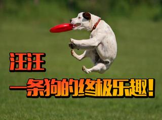 【Frisbee飞盘初体验】,原来当狗也是蛮有趣的哈哈!
