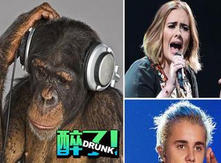 大猩猩的世界里,音乐几乎就是噪音!