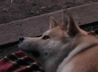 他亲自给他的狗实行了安乐死,只为留住不舍