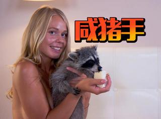 跟美女拍完广告后,这只浣熊就变成了色狼