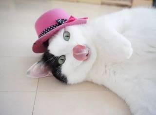 看到日本这只猫咪的绝活,才发现我养的猫可能是只假猫!