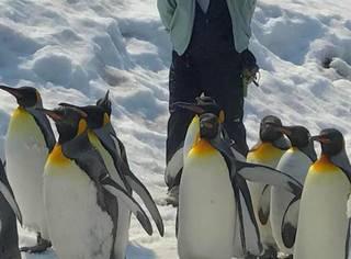 日本一只不合群的企鹅宝宝,没有任何朋友,却在人类圈里火了!