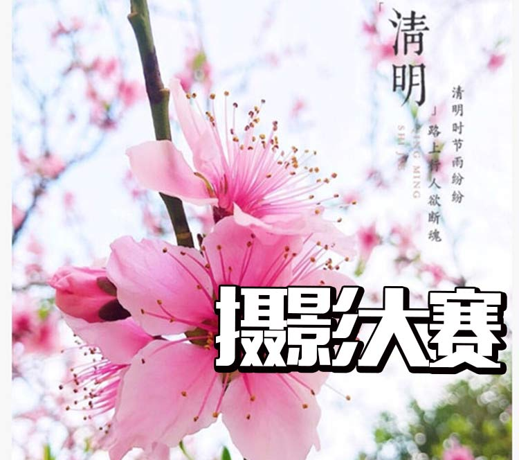 【开奖啦】随手拍春天~橘子杯摄影大赛颁奖,看看有你吗?