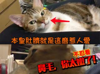 主人狂亲肚脐眼儿,旁边叫鼻毛的猫受不鸟啦!(视频)