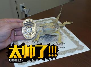 警局里不止有警犬,还有警蜥蜴