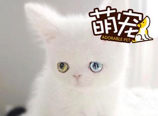 这只喵的眼睛太迷人,像宝石一样