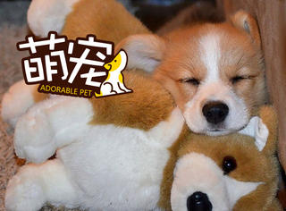 没有毛绒玩具的夜晚,我怎么睡得着