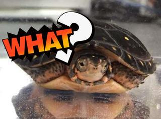 日本网友拍摄乌龟,竟在照片中发现了两个印度人