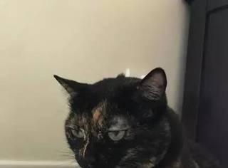 网友家的猫咪喝水的时候一直是这个表情,第一眼我就笑喷了...