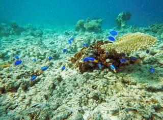 曾经低调到地图上都找不到的海岛小镇,如今成了潜水迷的天堂,海底世界美到爆!