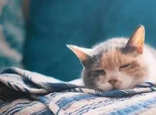 一家董事长是猫的公司,招人要求只有这一个,好想去应聘...