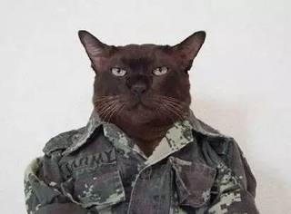 终于可以养猫了,你是什么样的心情?