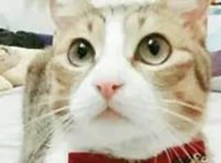 不要低估一只流浪猫的颜值,养好了美到你原地爆炸...