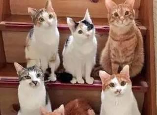 你知道给一群猫拍一张合影有多难吗?