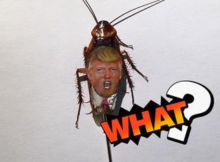 在蟑螂身上画川普,艺术家这波反抗有点特别
