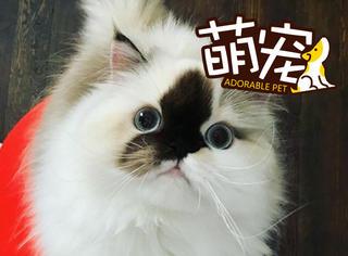 呀,这只猫脸上是蘸了墨水吗?