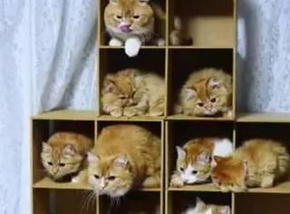 网友为9只橘猫盖了一个4层迷你楼,以为它们会乖乖的,结果...