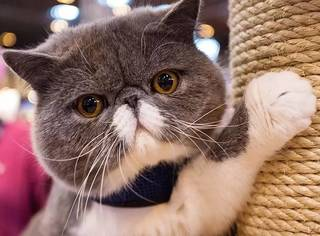 """歪果仁如何在中国""""科学吸猫""""?"""