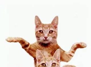 从古埃及到中世纪,你不知道的神秘吸猫史!