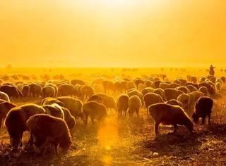 大漠苍凉,塞外风光,恍如梦境——这里是新疆!