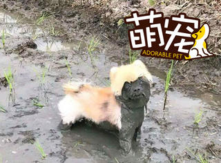 20张图告诉你,为啥别让狗玩泥巴