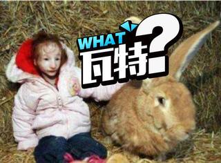 现实版拇指姑娘,像洋娃娃14岁比兔子小