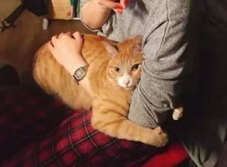 因为怕黑,每次睡觉这只猫咪都要抱着主人的胳膊才能睡觉着...